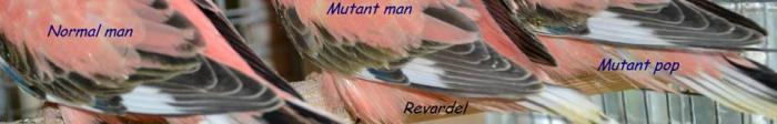 bourke-mutant-4.jpg