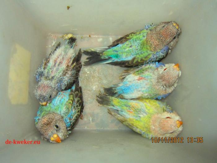 bourke-opaline-bleu-bebes-2.jpg