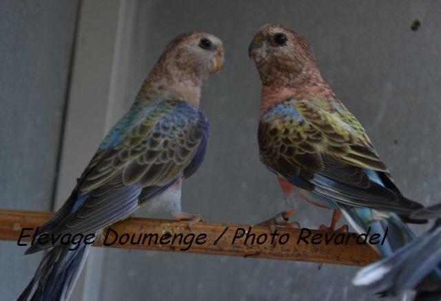 bourke-opaline-bleu-couple.jpg