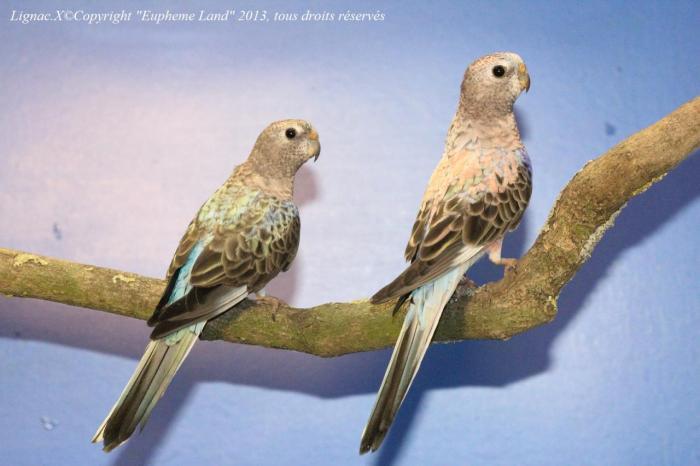 bourke-opaline-bleu-le-couple.jpg