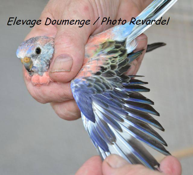 bourke-opaline-bleu2.jpg