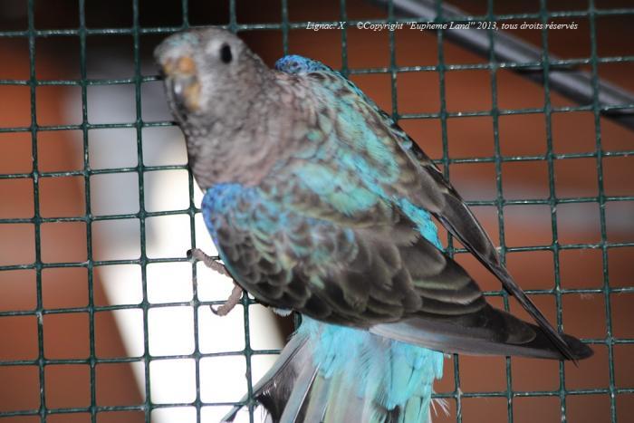 bourke-selection-bleu-4.jpg