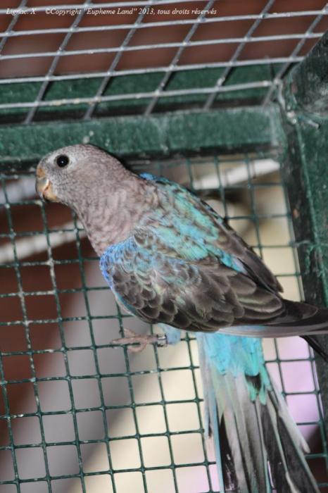 bourke-selection-bleu-5.jpg