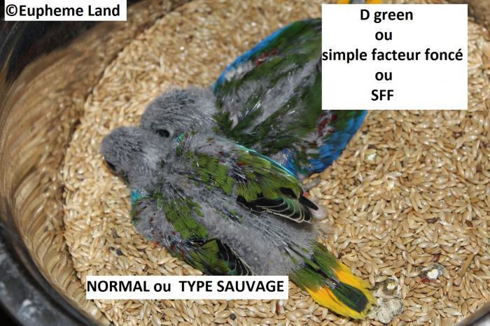Comparaison D vert & vert