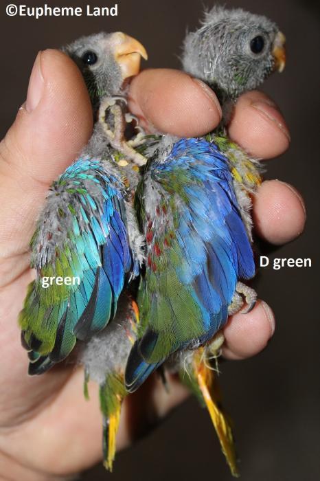 Comparaison D vert / vert