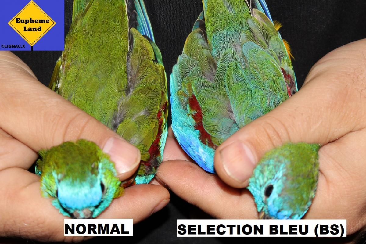 Comparaison normal selection bleu 2