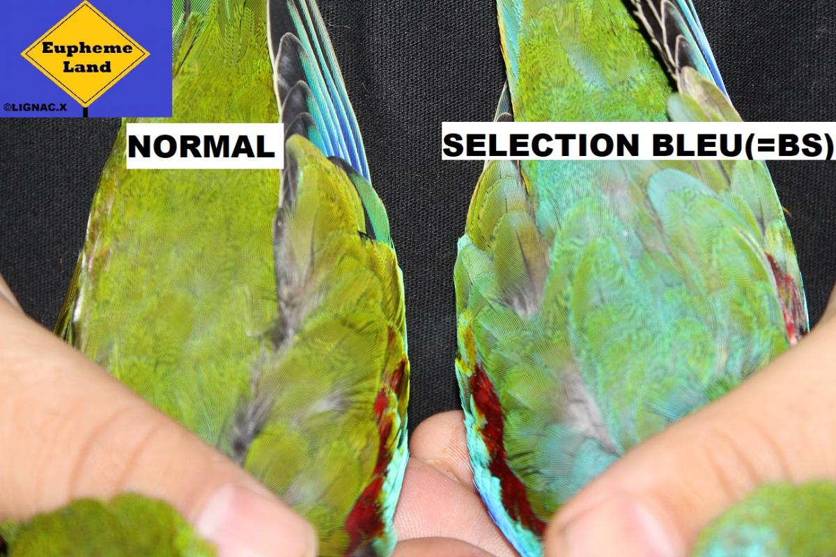 Comparaison normal selection bleu 3