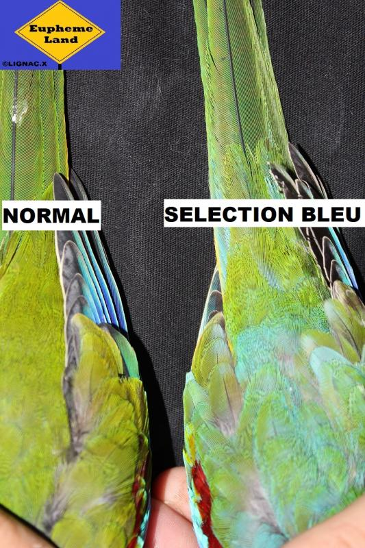 Comparaison normal selection bleu 4