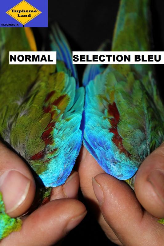 Comparaison normal selection bleu 6