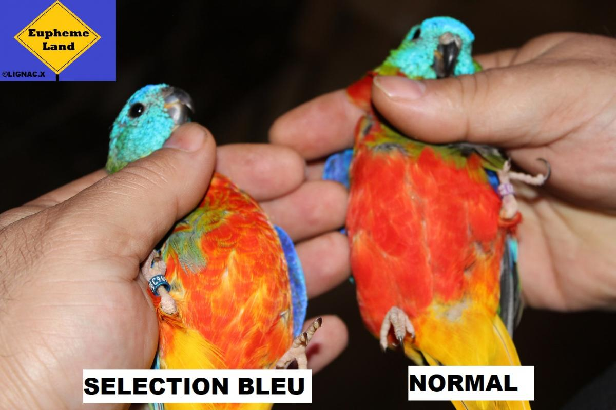 Comparaison normal selection bleu 8