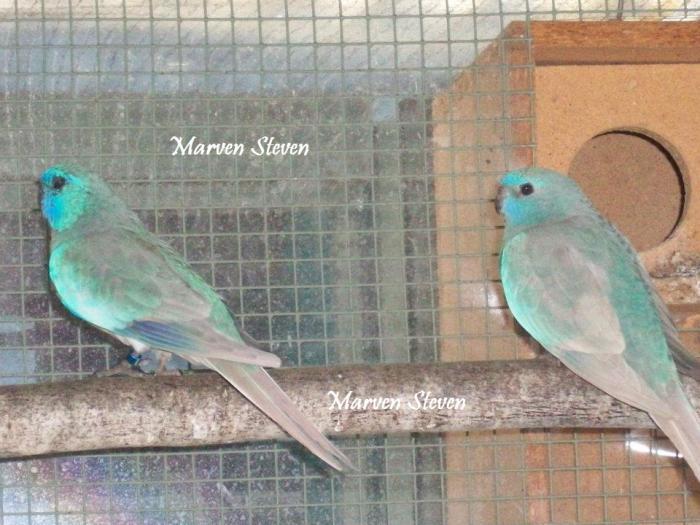 couple-de-pastel-bleu.jpg