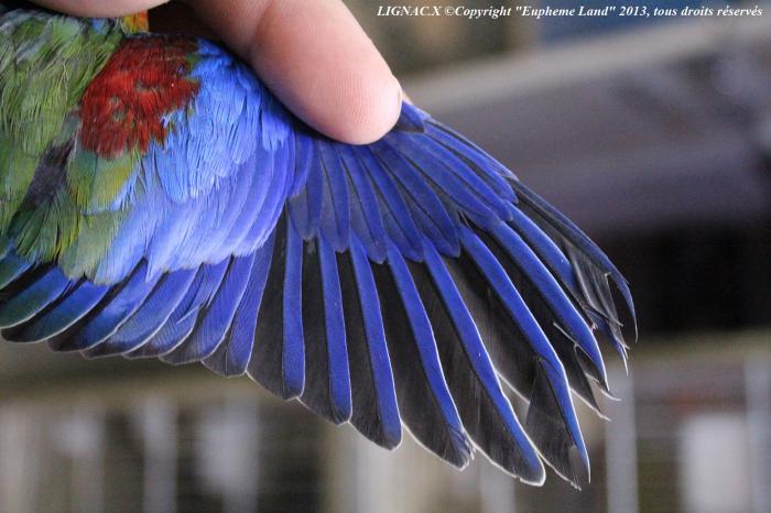 plume des ailes vert foncé