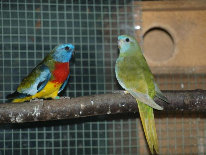 male-double-factor-khaki-et-femelle-simple-factor-khaki-pastel.jpg
