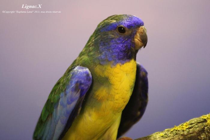 spl-aqua-violet-male-1-1.jpg