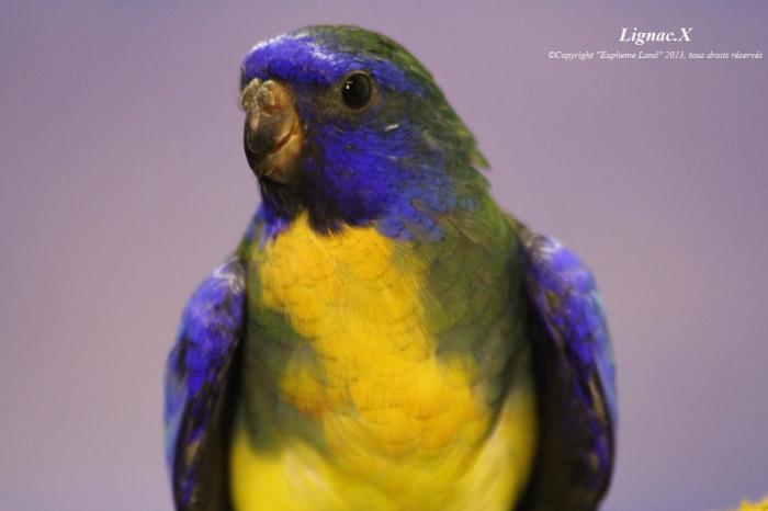 spl-aqua-violet-male-2-1.jpg