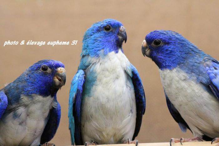 spl-bleu-pvb-au-milieu-de-2-violet-bleu.jpg
