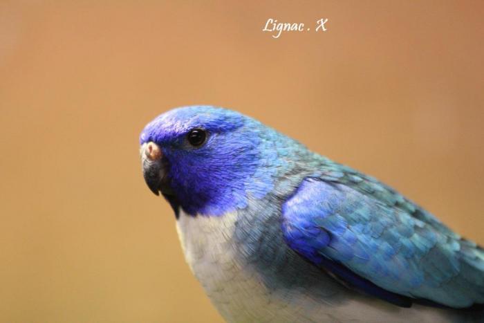 spl-bleu-pvb-male-1.jpg