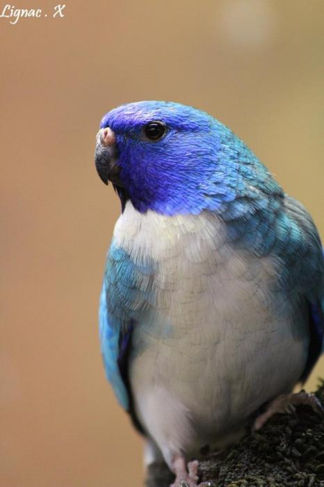 spl-bleu-pvb-male-4.jpg