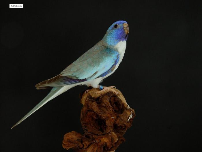 spl-cinnamon-bleu-1-0-b.jpg