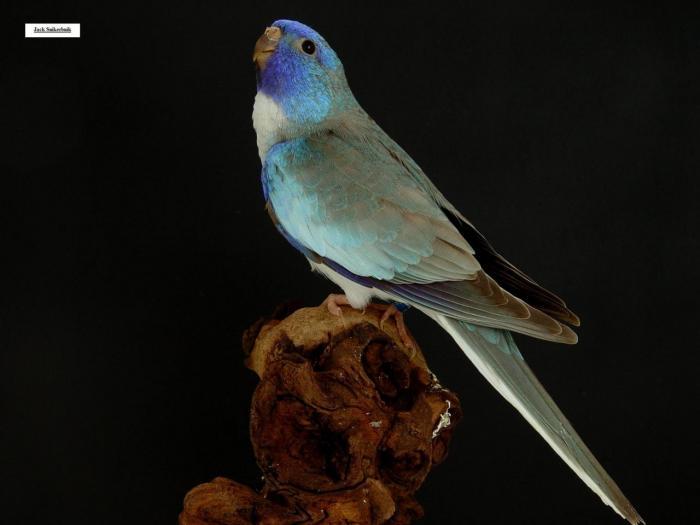 spl-cinnamon-bleu-1-0.jpg