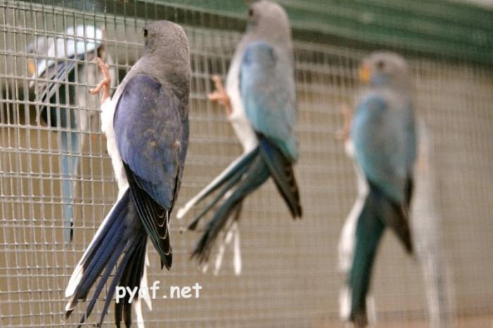 spl-comparaison-violet-bleu-et-bleu.jpg