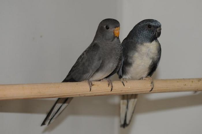 spl-couple-gris.jpg