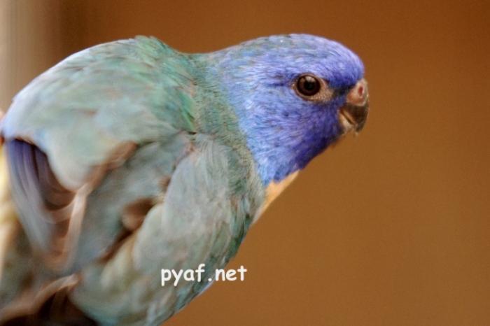 spl-male-violet-aqua.jpg
