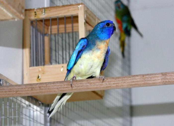 spl-male-violet-aquableu.jpg