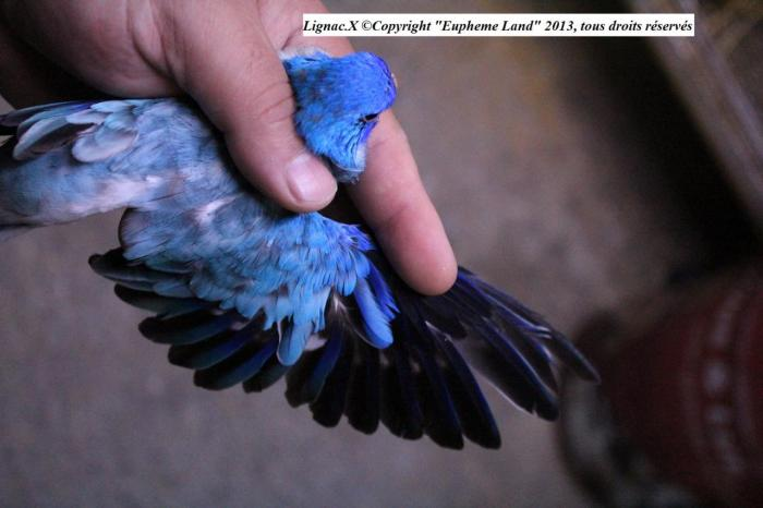 spl-opaline-bleu-1-0-1.jpg