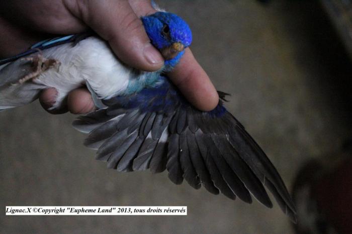spl-opaline-bleu-1-0-3.jpg