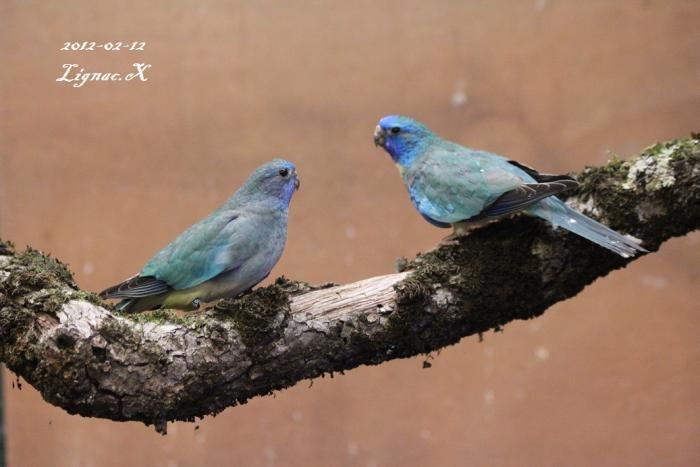 spl-turquoise-le-couple-1.jpg
