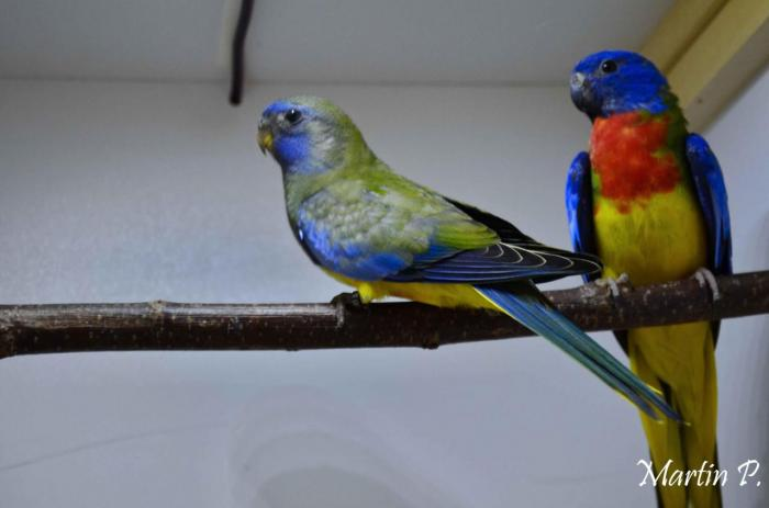 spl-type-sauvage-violet-le-couple.jpg