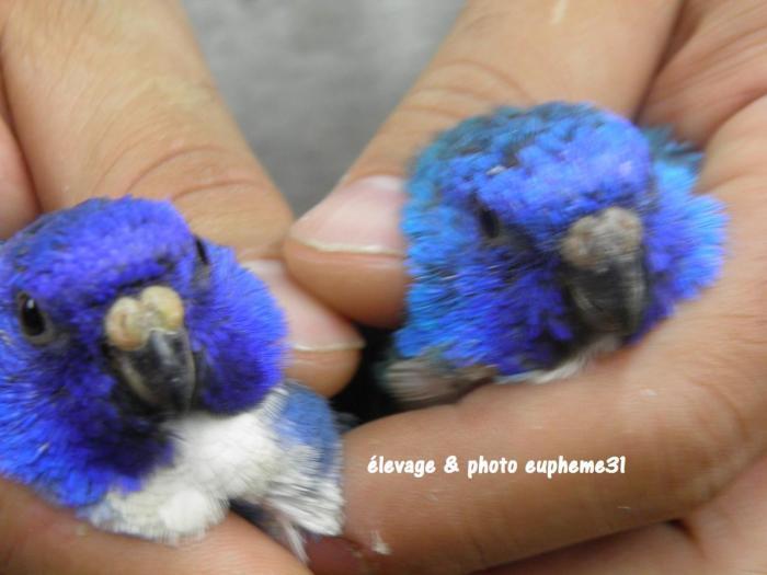 spl-violet-bleu-bleu-comparaison-1.jpg