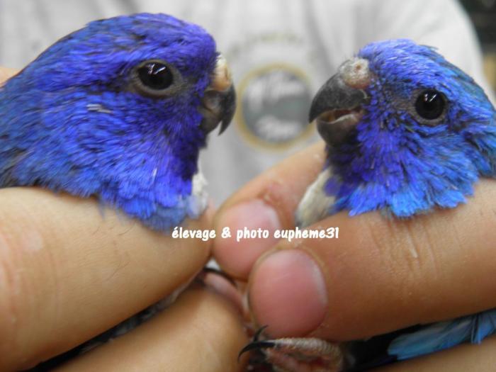 spl-violet-bleu-bleu-comparaison-2.jpg