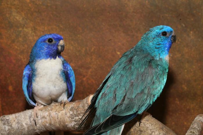 spl-violet-bleu-bleu-comparaison-4.jpg