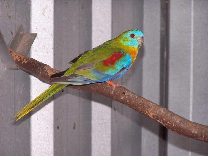 turq-dun-fallow-male-1.jpg
