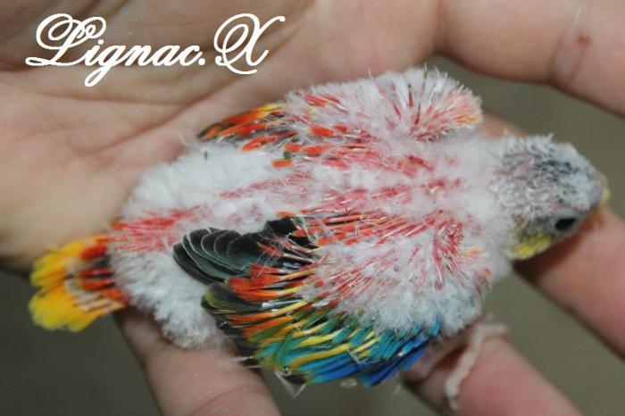 turq-opaline-pvr-bebe-3.jpg