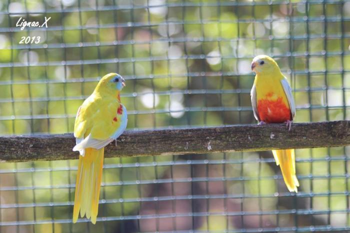 turquoisine-dilue-pvr-le-couple.jpg
