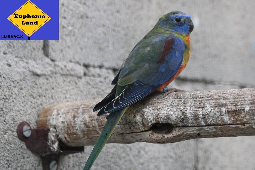 Turquoisine selection bleu 1