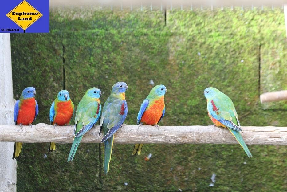 Turquoisine selection bleu 5