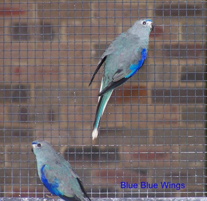 venuste-bleue-1.jpg