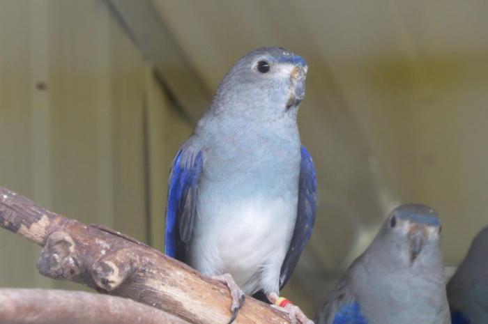 venuste-bleue.jpg